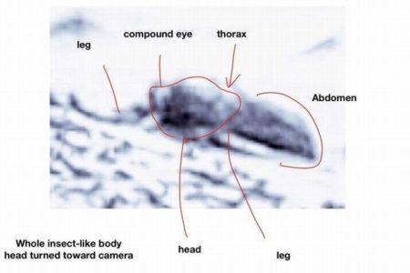 火星に昆虫を発見か?米科学者が写真を分析し、生物の存在を主張