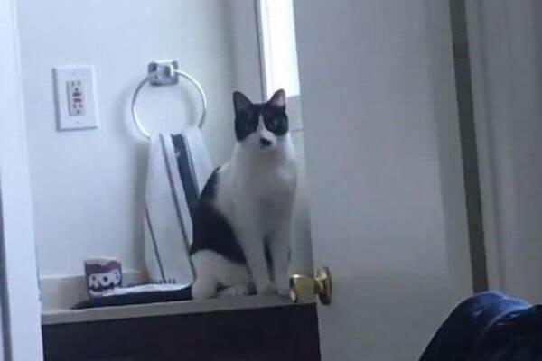 招き猫のよう!手を振って「こんにちは」をするニャンコの動画が話題に
