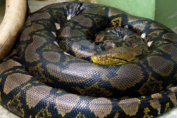 民家で死亡した女性、発見時には首に2m以上のヘビが巻き付いていた