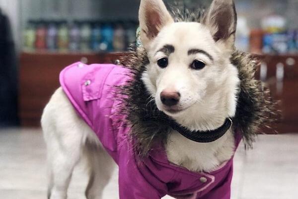 生まれながらの眉毛で貰い手がなかったロシアの犬、ついに里親に引き取られる