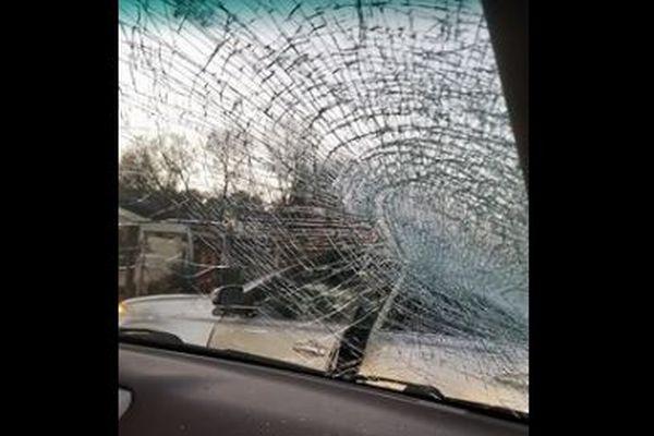 前代未聞!鳥が大きなナマズを落とし、車のフロントガラスを粉砕