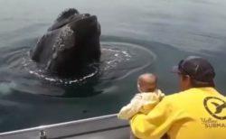 海の中から「いないいないばあ」、クジラが赤ちゃんに挨拶する様子がユニーク
