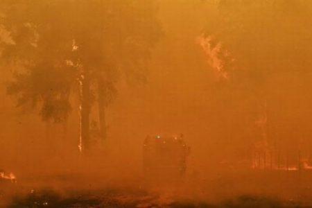 オーストラリアで続く山林火災、行方不明になっていたワンコが飼い主と再会