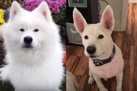 ペットの美容室へ行ったら「別犬」に変身しちゃった!飼い主も分からず