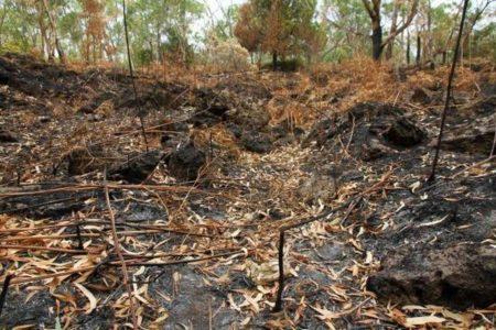 豪の山林火災で焼かれた土地から、6600年前の水産養殖システムの一部を発見