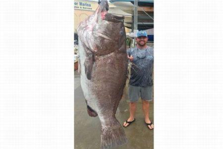 海にはこんな怪物が…米沖合で150kg以上のワルシャワ・グルーパーを釣り上げる