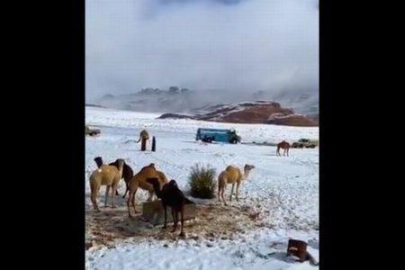ラクダもびっくり?!サウジアラビアの広大な土地が一面、雪に覆われる