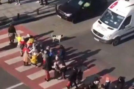 「そこの車、止まるんだワン」横断歩道を渡る幼稚園児を助けるワンコがかわいい