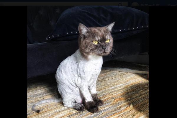 建設現場で遊んだネコ、毛についた有害物を落とすため、笑うに笑えない姿に
