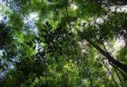 ペルーのジャングルで34日間も彷徨い続けた家族、果実を食べて生き延びる