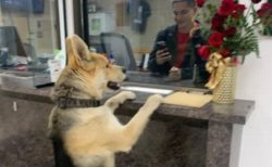 「僕、迷子になっちゃった」真夜中に突然、警察署を訪れたワンコが話題に