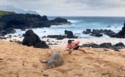 「モンクアザラシ」を叩いて逃げる男の動画、投稿者にも非難殺到