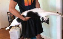 ビヨーんと伸びきった胴の長い猫たちの写真がかわいい
