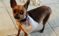 新型コロナで自主隔離中の男性、愛犬に買い物を頼み「チートス」をゲット!