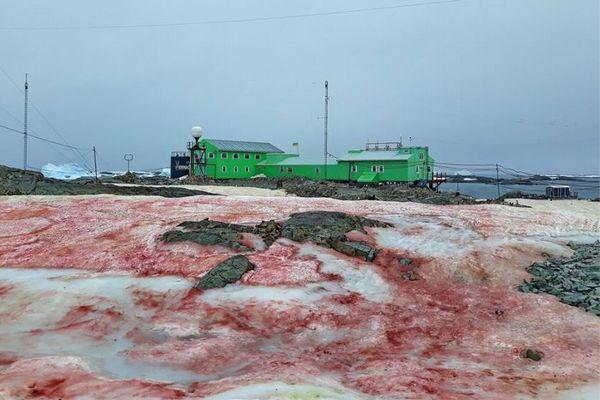 血のように赤く染まった雪、南極大陸の沿岸部に出現