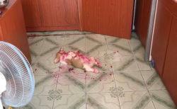ドラゴンフルーツを食べた犬がホラーなシーンを作ってしまった