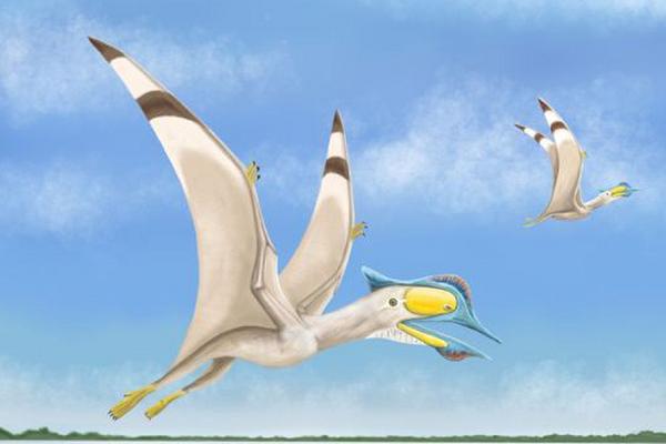 100万年前に生息した翼竜、4種の新種を発見、その特徴とは?