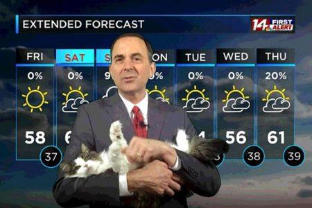 テレワークでの放送中に猫が乱入!お天気キャスターが一躍人気者に