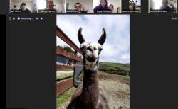 """会議にヤギ?新型コロナで閉鎖中の牧場、オンライン会議に動物を""""貸し出す""""サービスを開始"""