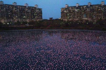 新型コロナの影響か?インドの川に例年になく多くのフラミンゴが飛来