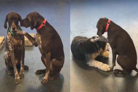 【動画】犬に寄り添い「よしよし」する犬が、SNSで人気上昇中