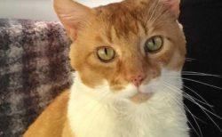 新型コロナで飼い主と離れ離れになった猫、無事再会を果たす