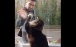 家の前を通る人にバイバイ!毎朝手を振るニャンコの動画が可愛すぎる