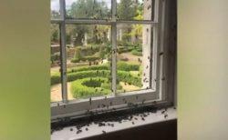 英の家に無数のミツバチ、キッチンに巣を作り始めて住人もびっくり