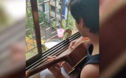 鳥もギターの音色が分かる?インドで音楽に加わるオウムが可愛い