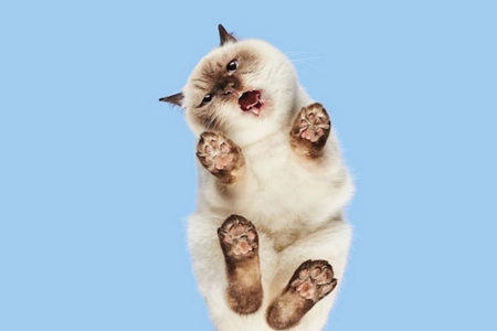 肉球もバッチリ!ネコを下から撮って、新たな可愛らしさを発見