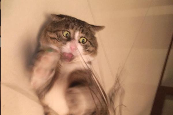 顔がドラマチックな猫、インスタでのフォロワー急増中