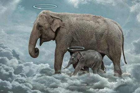 パイナップルに仕込まれた火薬で死んだ妊娠中の母象、集まった追悼アートが悲しい