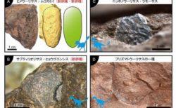 兵庫県で世界最小の小型恐竜の卵化石を発見:筑波大学
