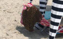 米のビーチに大量のハチが出現、観光客の椅子にとまって群れを作る