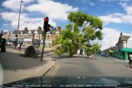 2人の歩行者が危機一髪!歩道にあった大木が突然倒れる【動画】