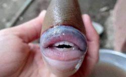 分厚い唇に人間のような歯…マレーシアで捕獲された魚が話題に