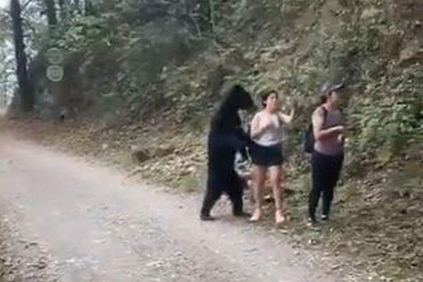 メキシコで女性らが野生のクマに遭遇、一緒に自撮りをする動画が話題に
