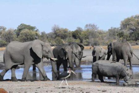 ボツワナでゾウが謎の大量死、5月初旬から350頭が死亡、原因はいまだ不明