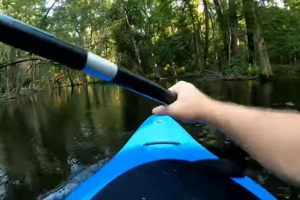 森にある川をカヤックで進んでいたらワニが出現、突然襲われる動画にドキドキ