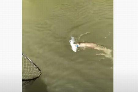 1つのルアーで2匹の魚をゲット!珍しい幸運に釣り人も大喜び