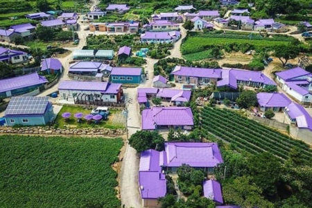 インスタ映えする韓国の新リゾートは、紫だらけの島