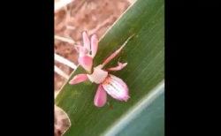 這い回る蘭の花に、ネットユーザー唖然