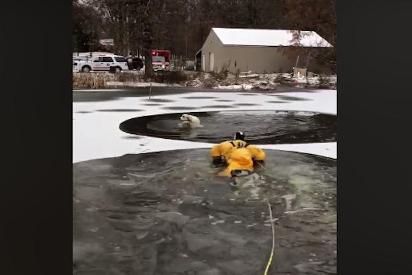 凍った池に落ちたワンコ、専門のレスキュー隊が見事に救助【動画】