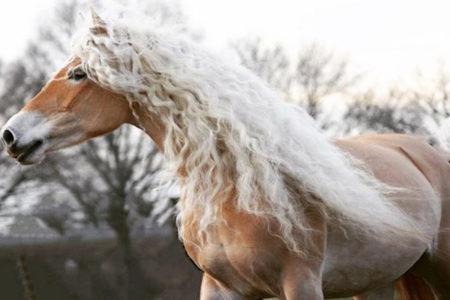 インスタで人気上昇中、ゴージャスなたてがみを持つ雌馬