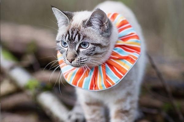 数えきれない小鳥の命を救った主婦の発明品は猫の首輪