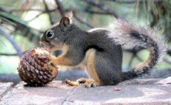 米コロラド州でリスから腺ペストの陽性反応、人間やペットへの感染に注意