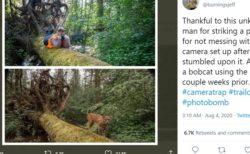 山中に仕掛けたカメラに写っていた意外な生物の正体は?