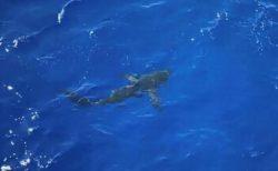 海で泳ぐ沿岸警備隊員にサメが接近、気付いた乗組員が船から銃撃