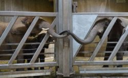 12年間も離れ離れだったゾウの親子、ドイツの動物園で再会