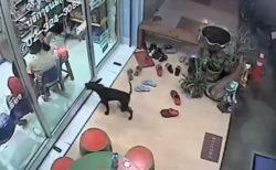 タイの賢いワンコ、迷子になるも通っていた動物病院に助けを求め、飼い主と再会